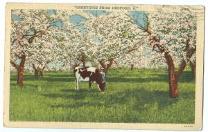 Greetings from BEDFORD, Ohio, 1944 used linen Postcard