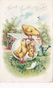 Easter With Chicks Coming Out Of Egg 1908 Tucks