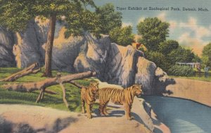 DETROIT , Michigan , 30-40s ; Tiger Exhibt at Zoo