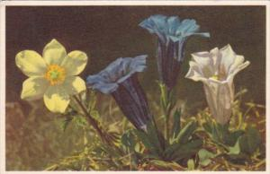 Flowers Sulphur Yellow Anemone and Stemless Gentian