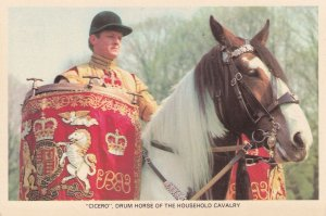 Cicero Drum Horse Of The Household Cavalry Military 1970s Postcard