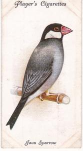 Cigarette Cards Playe Aviary and Cage Birds No 40 Java Sparrow
