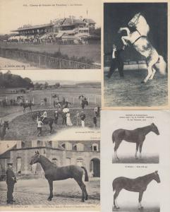 CHEVALS HORSES 453 ANIMAUX Cartes Postales 1900-1940