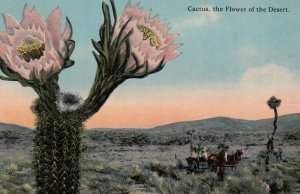 Cactus, the Flower of the Desert, 1900-10s