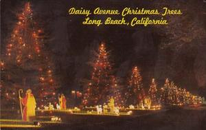 California Long Beach Daisy Avenue Christmas Trees
