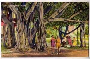 Banyan Tree FL