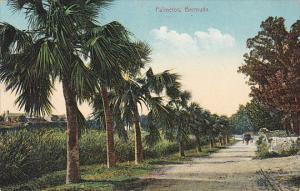 Palmetto Lined Road Bermuda