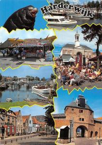 Netherlands Harderwijk Harbor Boats Sea Lion Ijsselmeer Paling Market