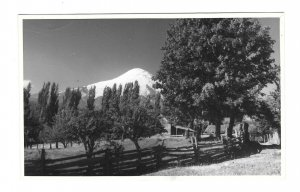 South America Chile 1950 Log Cabin Mountains Real Photo No Postcard Format