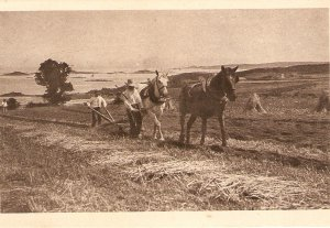Working horses. Ploughing Old vintage French postcard