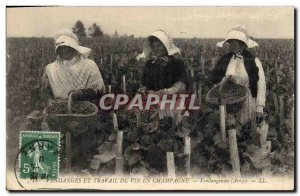 Old Postcard Folklore Harvest and labor Champagne wine pickers Avize TOP