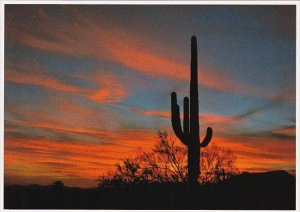 Arizona Mesa The Sonoran Desert Is Famous For Saguaro Cactus And Speatacular ...