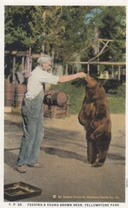 Feeding a bear in YELLOWSTONE Park , Wyoming , 1910s