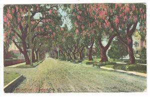 Marengo Ave., Pasadena California,PU-1916