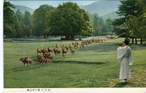 Postal-Postcard 17281: KASUGA SHRINE NARA - Gathering of Deers