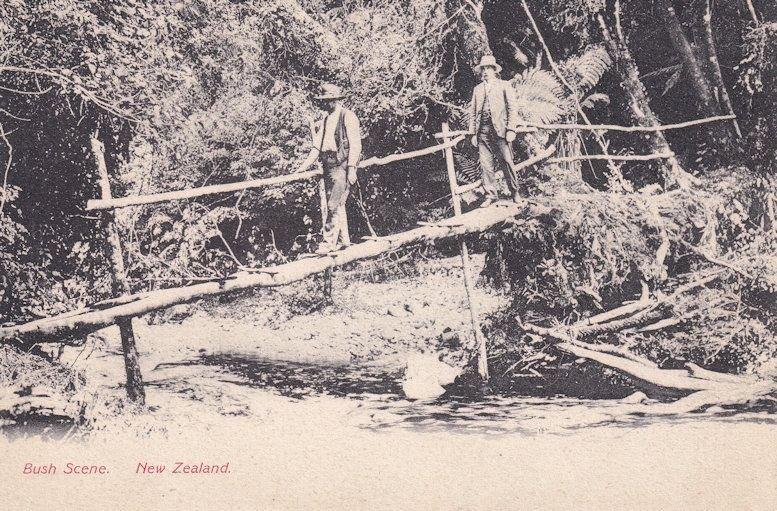 Bush Scene New Zealand Antique Postcard