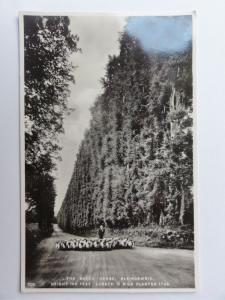 c1930's RP - The Beech Hedge - Blairgowrie