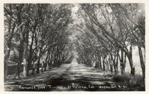 RP: ST. HELENA , California , 1930-40s ; Tree Tunnel