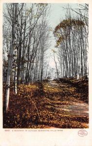 Berkshire Hills MA Detroit Publishing #10101~Fallen Birch Tree Leaves Road 1906