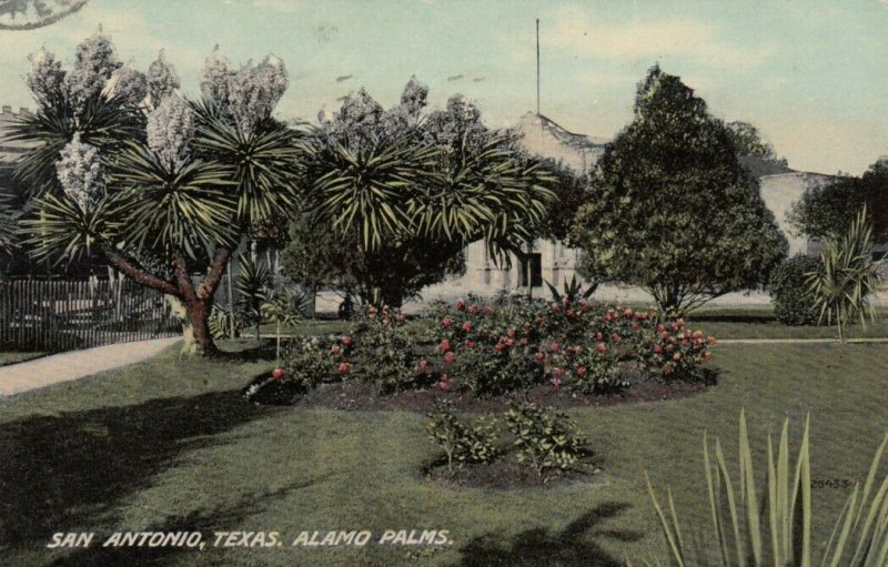SAN ANTONIO , Texas, 1912 ; Alamo Palms