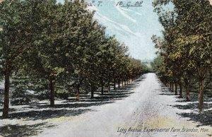 Long Avenue Experimental Farm Brandon Canada Old Postcard
