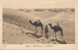 Egypt:  The Passage in the Desert, Early Postcard Showing Camels, Unused