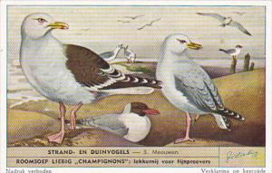 Liebig S1610 Birds Of Beaches and Dunes No 3 Meeuwen