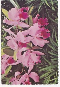 Postcard Orchids in the Edwardian Garden, The Duke Gardens, Somerville, N.J.