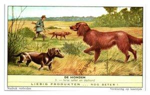 Irish Setter and Dachshund, Dog Breeds II Liebig Belgian Trade Card *VT28C