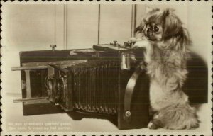 Dog & Camera NICE CLOSEUP Pekingese? Dutch Real Photo Postcard