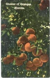 Cluster Of Oranges, Florida, PU-1914
