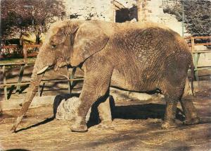 Dudley Zoo african elephant postcard