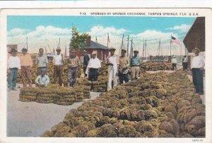 Florida Tarpon Springs Sponges At Sponge Exchange