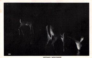 Deer at Night,Neenah,WI BIN