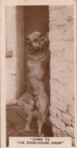 Cook Kitchen Pub Bulldog Dog Antique German Real Photo Cigarette Card