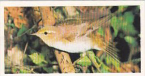 Brooke Bond Vintage Trade Card Woodland Wildlife 1980 No 9 Wood Warbler