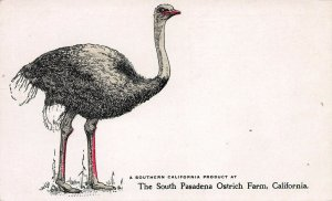 The South Pasadena Ostrich Farm, Embossed, Private Mailing Card, Unused