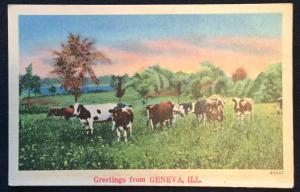 Postcard Linen Unused Cows Geneva IL LB