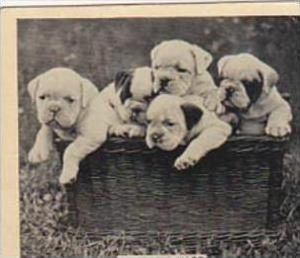 Phillips Cigarette Card Our Favorites No 28 Puppies In A Basket