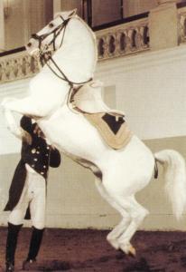 Courbette Spanish Riding School Of Vienna Postcard