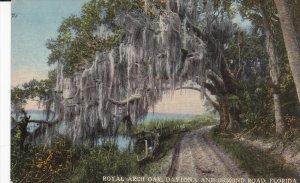 DAYTONA, Florida, 1900-1910's; Royal Arch Oak, Daytona And Ormond Road