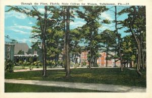 Tallahassee Florida~Through The Pines Florida State College For Women 1920s