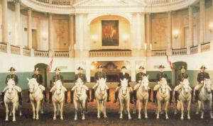 Spanish Riding School Of Vienna Mounted Riders Procession Official Postcard