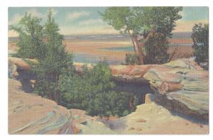 AZ Petrified Forest National Park Natural Bridge 1939 Curteich Linen Postcard