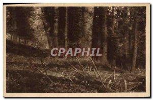 Postcard Old Sumava prales