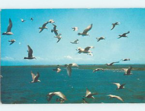Pre-1980 BIRDS FLYING ALONG SHORE Stone Harbor by Wildwood & Cape May NJ AD5969