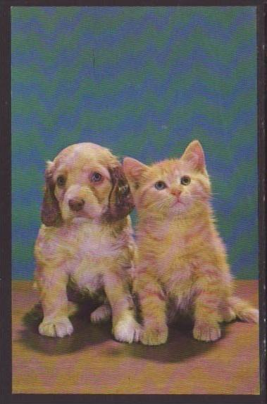 Kitten and Puppy Postcard