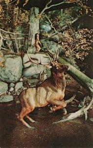 Postcard Hunter and Elk Museum Albay New York