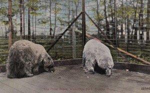 TOLEDO, Ohio, 00-10s; Polar Bears, Walbridge Park