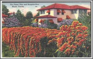 Florida Flame Vine & Bougainvillea - [FL-110]